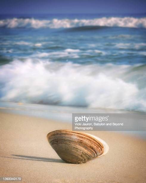 clam shell on beach against waves on sunny winter day on long island - wantagh stock pictures, royalty-free photos & images