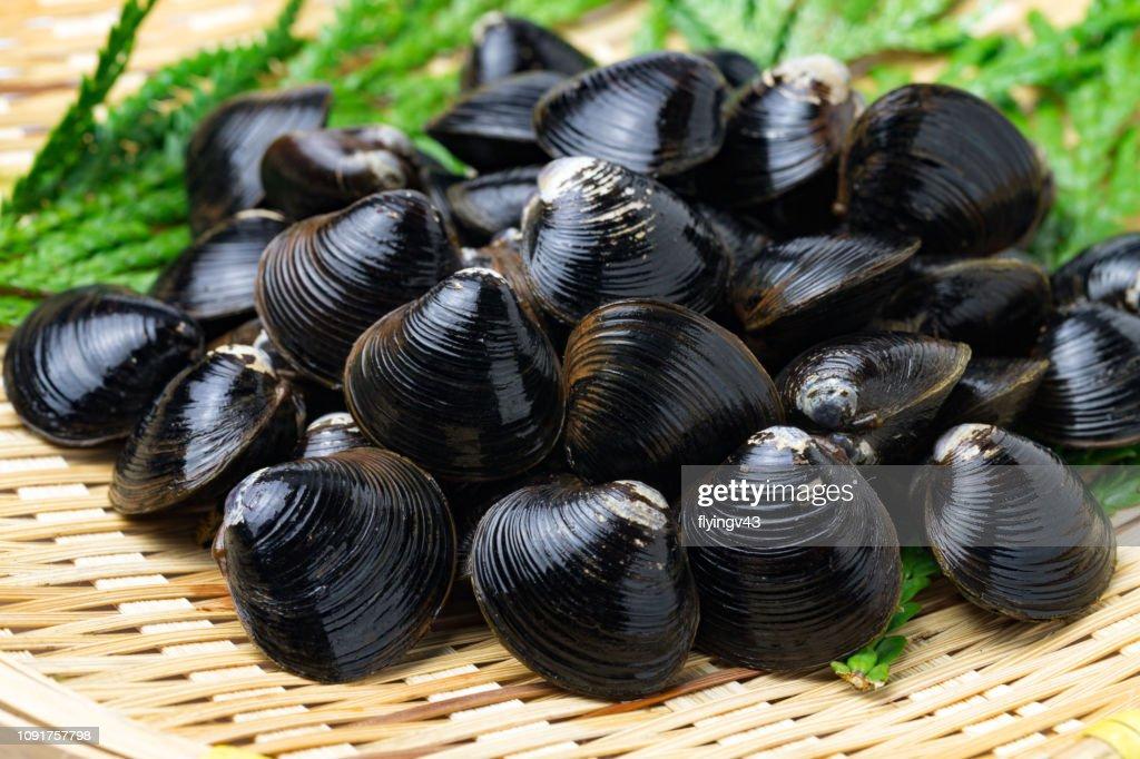Clam shell : Stock Photo