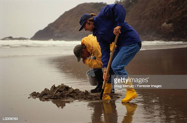 clamming - clams stock photos and pictures