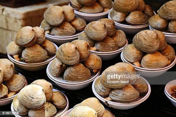 clams, jagalchi market, busan, korea - clams stock photos and pictures