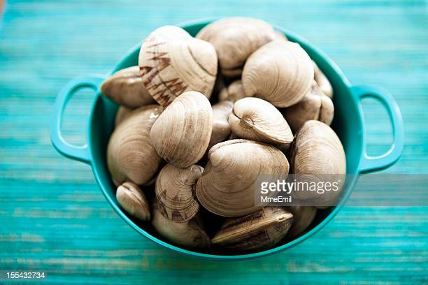 clams - clams stock photos and pictures