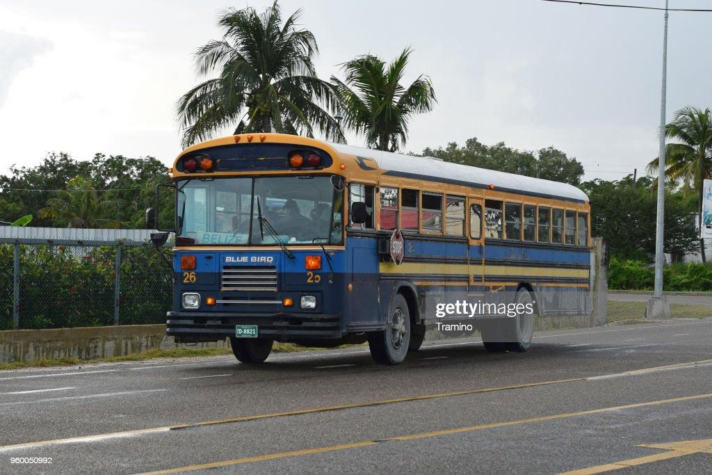 Klassische Blue Bird-Bus auf der Straße fahren : Stock-Foto