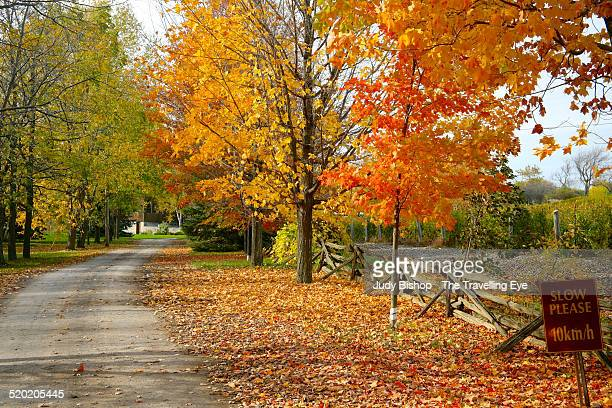 classic canadian country roadside in fall colors - contea di prince edward ontario foto e immagini stock