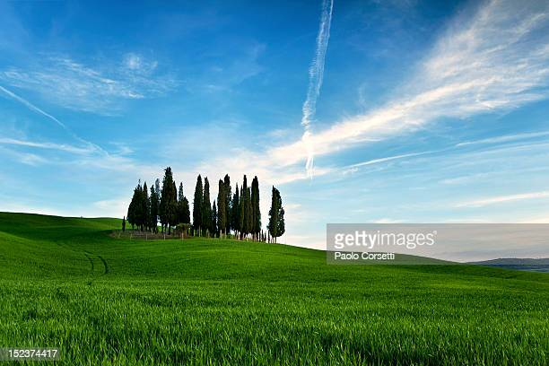 classic cypresses - san quirico d'orcia stock pictures, royalty-free photos & images