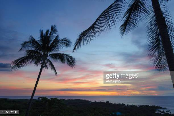 Classic palm tree sunset in South Kona, Hawaii