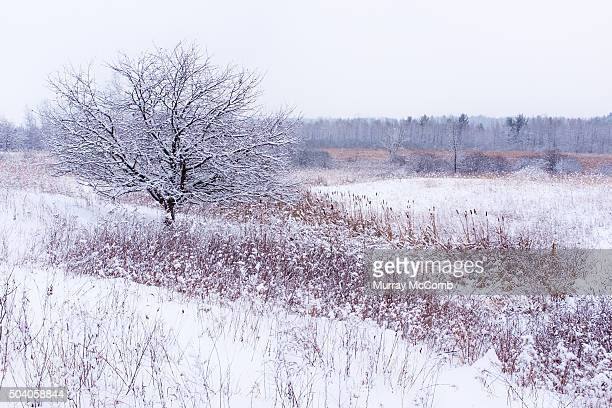 classic winter scenery - murray mccomb stock pictures, royalty-free photos & images
