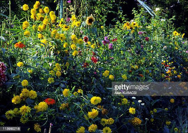Claude Monet Gardens Giverny Eure France In 2005Tagetes Tittonia Dahlias Chrysanthemum Helianthus