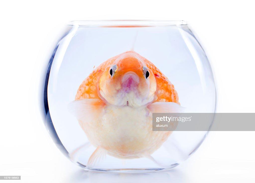 claustrophobia : Stock Photo