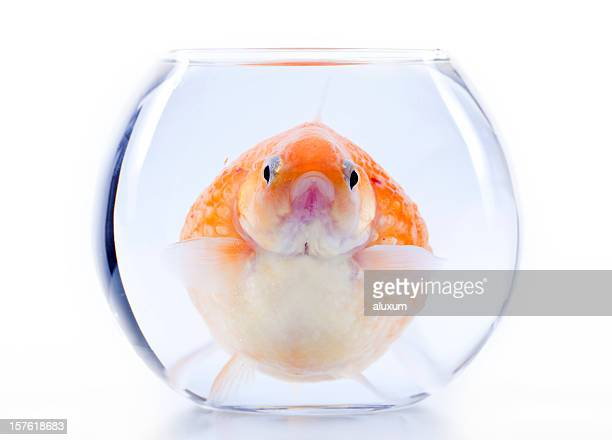 claustrophobia - big fish stock pictures, royalty-free photos & images
