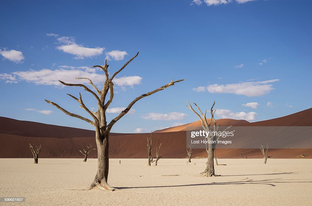 Clay pan with dead trees and sand dunes, Deaddvlei, Sossusvlei National Park, Namibia : Stock Photo