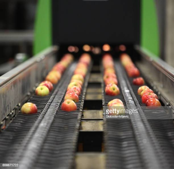 clean and fresh apples on conveyor belt - apple fruit stock photos and pictures