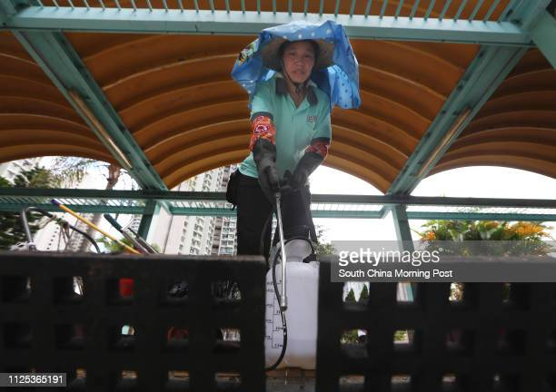 A cleaner spraying insecticide to the drain to prevent mosquito breeding at Tin Shui Estate at Tin Shui Wai after a Japanese Encephalitis case...