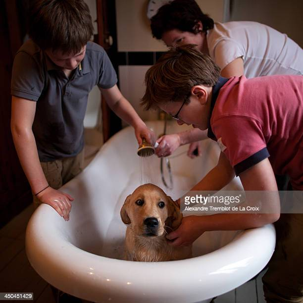 cleaning a puppy dog in a bathtub - boys taking a shower stock pictures, royalty-free photos & images
