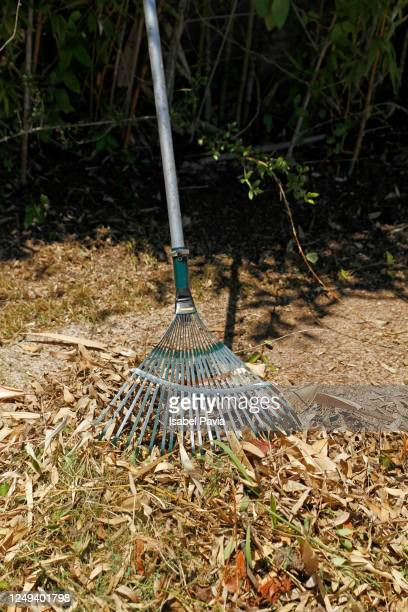 cleaning dry leaves in garden - midsection stock pictures, royalty-free photos & images