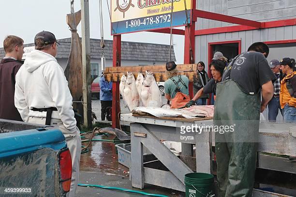 Cleaning the halibut, Homer,Alaska