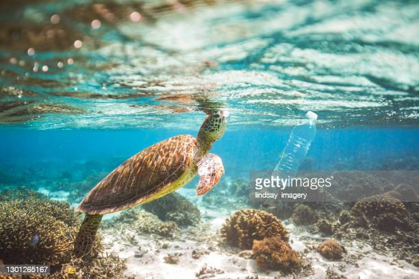 clear blue aqua marine ocean with turtle and plastic bottle pollution - sea stock pictures, royalty-free photos & images