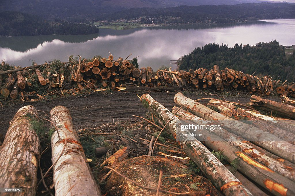 clear cut logging near lake whatcom in bellingham washington stock photo getty images. Black Bedroom Furniture Sets. Home Design Ideas