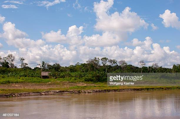 A clear cut with a house on stilts and a banana plantation along on the Ucayali River in the Peruvian Amazon River basin near Iquitos
