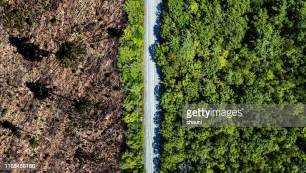 clear cutting border - deforestation stock pictures, royalty-free photos & images