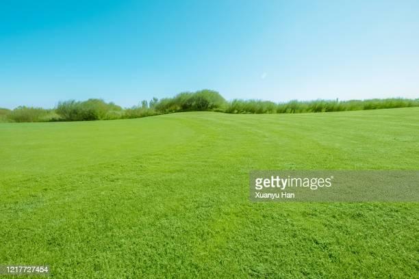 clear sky and green meadow - zona de prados fotografías e imágenes de stock