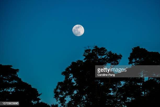clear sky on a full moon night above the kinabatangan river. - luz de la luna fotografías e imágenes de stock