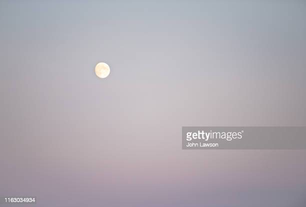 clear sky with moon - flower moon stock pictures, royalty-free photos & images