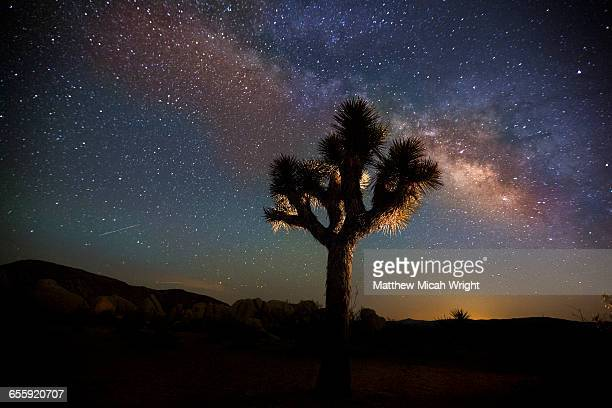 Clear starry nights over Joshua Tree.