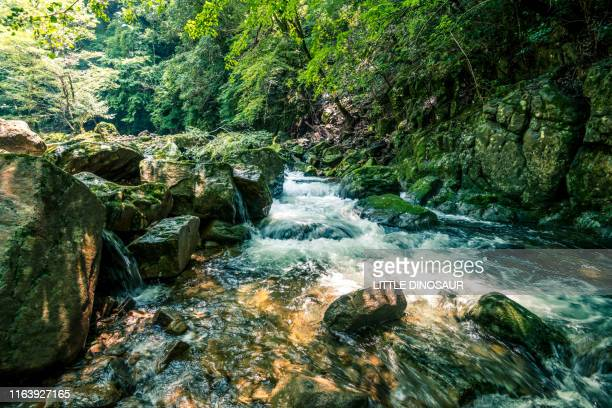clear stream flowing between rocks. at akame 48 waterfall - spring flowing water stock pictures, royalty-free photos & images
