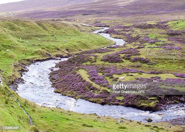 clear stream in skye - heather brooke ストックフォトと画像