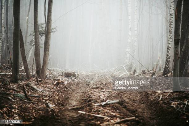 cleared woodland - deforestation stock pictures, royalty-free photos & images