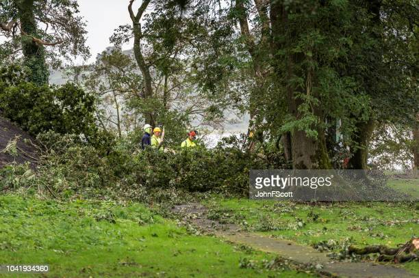 Clearing fallen branches after a storm