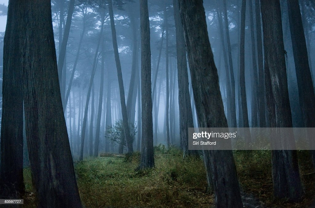Clearing in Cypress tree forest : Stock Photo