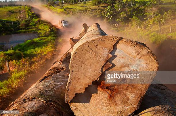Clearing large trees in the Amazon rainforest truck in back
