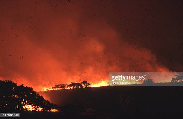 Clearing of Cerrado vegetation of the subtropical savanna biome by burning in Minas Gerais State, Brazil - The Campos Rupestres montane savanna is an...