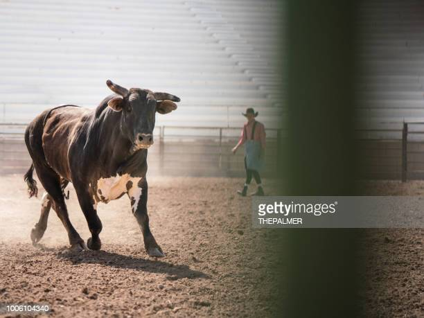 Clearing the bull from the rodeo arena