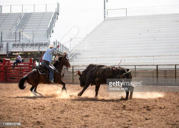clearing the bull from the rodeo arena - spanish fork utah stock pictures, royalty-free photos & images