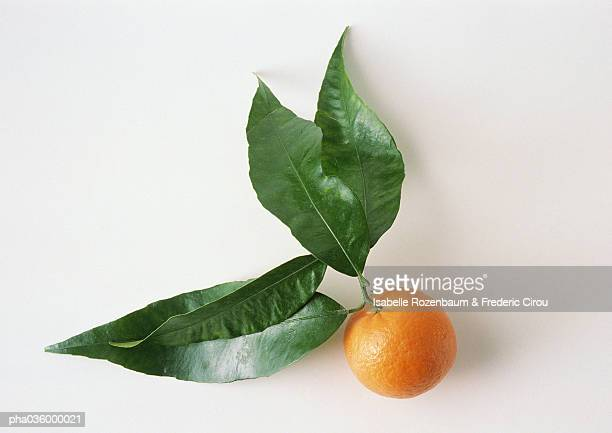 clementine with leaves, white background - ミカン ストックフォトと画像