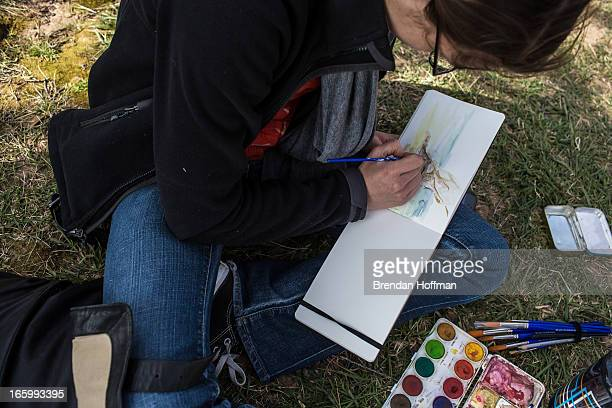 Cleo van der Veen paints a watercolor picture of blossoming cherry trees on April 7 2013 in Washington DC The blossoms are late this year a result of...