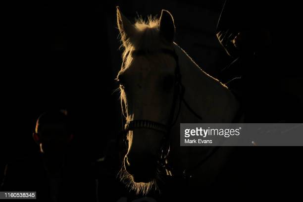 Clerk of the Course's horse is lit up by the late afternoon sun during Sydney Racing at Royal Randwick Racecourse on July 06, 2019 in Sydney,...