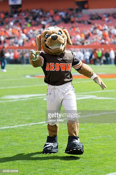 Cleveland Browns mascot Chomps on the field prior to the game against the New Orleans Saints at FirstEnergy Stadium on September 14 2014 in Cleveland...
