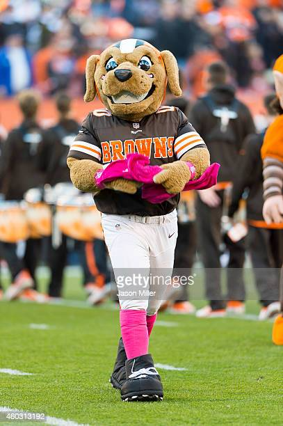 Cleveland Browns mascot Chomps on the field prior to the game against the Oakland Raiders during at FirstEnergy Stadium on October 26 2014 in...