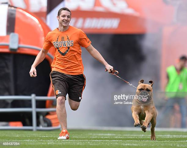 Cleveland Browns mascot Swagger runs onto the field prior to the game against the New Orleans Saints at FirstEnergy Stadium on September 14 2014 in...