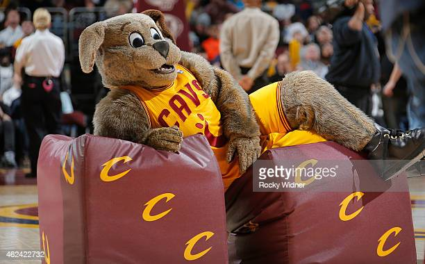 Cleveland Cavaliers mascot Moondog excites the crowd during the game against the Charlotte Hornets on January 23 2015 at Quicken Loans Arena in...