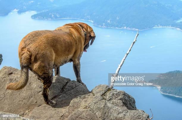 cliff stick - puggle stockfoto's en -beelden