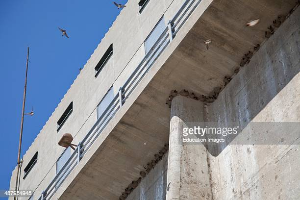 cliff swallows' mud nests Sepulveda Dam Sepulveda Basin Wildlife Reserve Los Angeles California