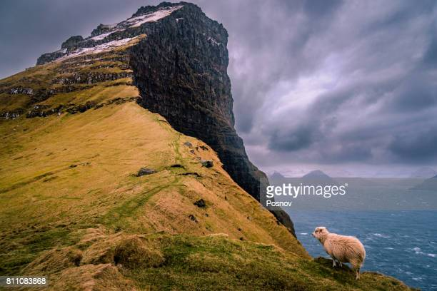 Cliffs, Wind, and Sheep