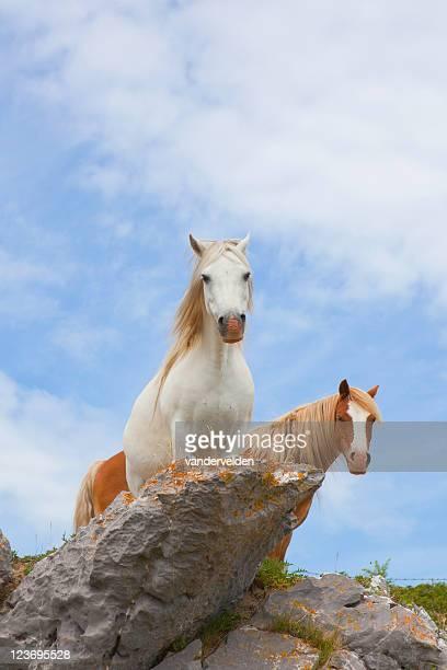 Clifftop Ponies