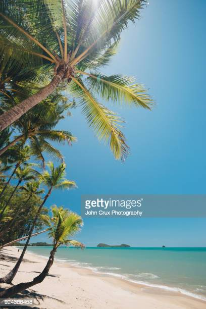 clifton beach palm trees - cairns stock pictures, royalty-free photos & images