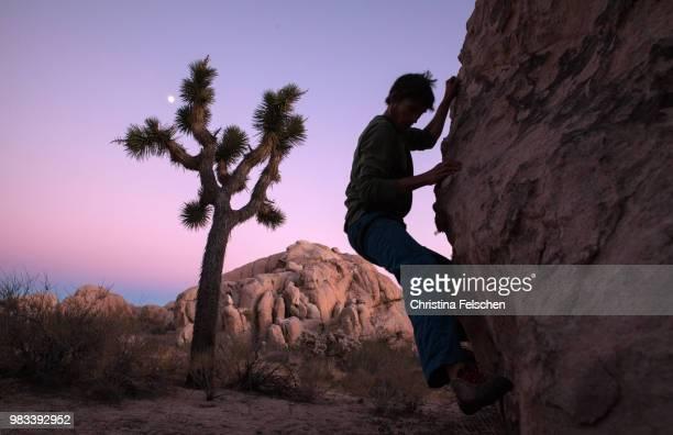 climber in joshua tree - christina felschen - fotografias e filmes do acervo