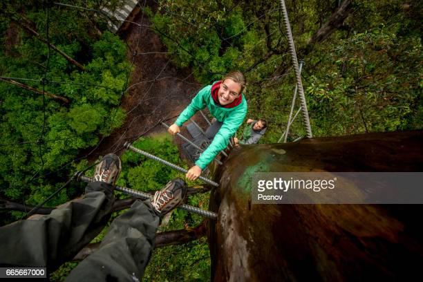 Climbing Bicentennial Tree